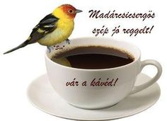 Funny taste in your coffee? Morning Coffee, Tea Cups, Mugs, Tableware, Coffee Lovers, Funny, Google, Pictures, Dinnerware