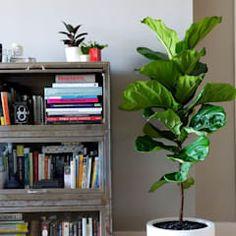Viviendo verde minimalist living room | homify Marginata Plant, Minimalist Living, Bookcase, Shelves, Interior Design, Living Room, Home Decor, Green, Plants