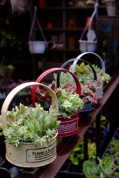 Small baskets of succulents Succulents In Containers, Cacti And Succulents, Planting Succulents, Planting Flowers, Succulent Display, Succulent Gifts, Succulent Arrangements, Tin Can Crafts, Dish Garden
