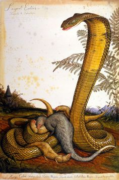Serpent Eaters by Walton Ford, Watercolour, gouache, pencil and ink on paper, x cm Walton Ford, Snake Art, Nature Artists, Wildlife Paintings, High Art, Reptiles And Amphibians, Gravure, Science And Nature, Natural History