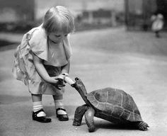little girl and a tortoise.