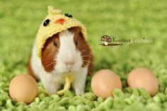 crochet guinea pig costume