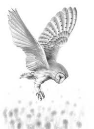 Flying owl pencil drawings - photo#18