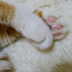 Fuzz on fuzz on fuzz. #fuzzysticks #instacat_meows #catsofinstagram #fuzzycat #meow #petstagram #catlovers #ilovemycat #ilovemypet #funpetloveclub #furpants #pawnography #pawproject #regram from @slowspine
