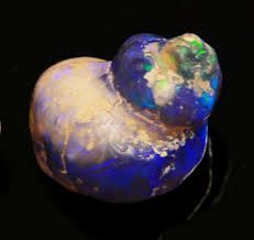 black opal filled in fossils and shells - Google Search
