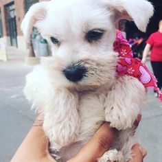Our adorable puppy fan. #pawsweetbakery