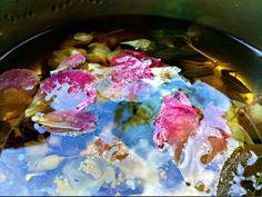 tea flowers under the blue sky Flower Tea, Beautiful Flowers, Sky, Ethnic Recipes, Blue, Food, Heaven, Heavens, Essen