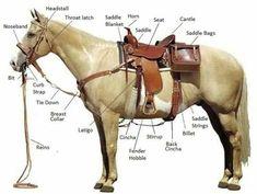 western saddle diagram western saddle parts diagram horse rh pinterest com
