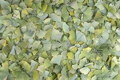 http://www.printedart.com/content/fall-leaves-4    Richard Silver: Fall Leaves    Available with acrylic finish for a float-on-the-wall display in sizes up to 90 x 60 inches.    Fall Leaves 4