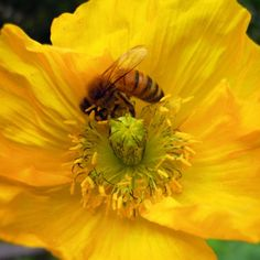 A Bee, See.