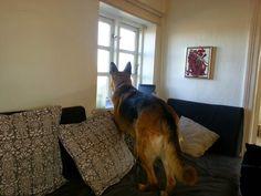 Mit hundeliv med Vaks.: Vores hjem er borte / Our home has gone