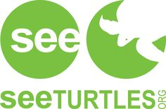 Sea Turtle Videos and Information