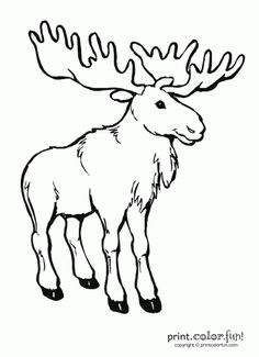 moose I can draw this