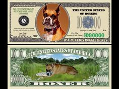 Boxer Bucks | Medical Expenses - YouCaring.com.. Please donated even $1.00 from a lot of caring Boxer lovers can mean so much in the lives of these Boxers waiting at the Rescue for their furever Homes,