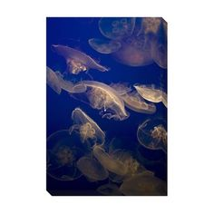 @Overstock - Artist: UnknownTitle: Jellyfish Product type: Gallery-wrapped canvas arthttp://www.overstock.com/Home-Garden/Jellyfish-Oversized-Gallery-Wrapped-Canvas/7708175/product.html?CID=214117 $134.99