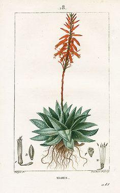 Botanicals: The taste of Petrol and Porcelain | Interior design, Vintage Sets and Unique Pieces www.petrolandporcelain.com Turpin Botanical Prints 1815