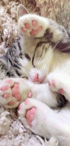 Love Cute Animals shares pics of playful animals, cute baby animals, dogs that stay cute, cute cats and kittens and funny animal images. Cute Cats And Kittens, I Love Cats, Crazy Cats, Kittens Cutest, Kittens Meowing, Small Kittens, Ragdoll Kittens, Tabby Cats, Bengal Cats