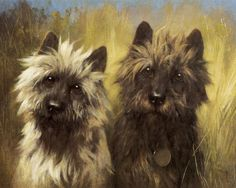 Two Cairn Terriers by Arthur Wardle