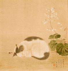 Young cat sleeping under saxifrage (detail) by Maruyama Okyo. Asian Art Museum