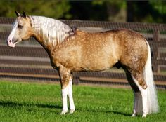 Big chex to cash famous reining horse