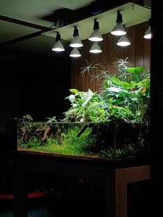 We were amazed to see updates for this splendid tank setup by our Canadian friend, Nigel Tobey. The Celestial Swamp uses taller background plants growing in rip Wall Aquarium, Aquarium Garden, Aquarium Stand, Aquarium Setup, Live Aquarium Plants, Nature Aquarium, Aquarium Design, Planted Aquarium, Small Water Gardens
