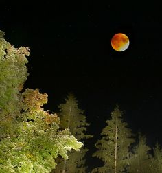 Super Blood Moon over New England Massachusetts tonight. [2051x2190] By Terri Cappucci