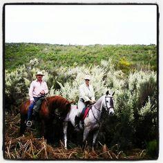 Retama blanca un gran fondo para nuestros caballos en Gredos