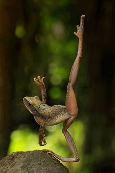 "Frog: ""I exercise 10mins. a day, then jog through the forest for 15mins. I then feel fit for the rest of the day. (Don't tell anyone that I ALSO practice ballet!"")"