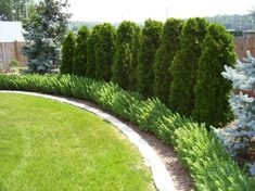 Different Types Of Landscape Edging . Different Types Of Landscape Edging . Landscape Edging Good Idea for the Backyard Along the Wall Landscaping Along Fence, Backyard Fences, Garden Fencing, Landscaping Tips, Backyard Ideas, Fence Ideas, Landscaping Software, Garden Landscaping, Arborvitae Landscaping