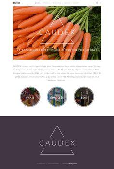 Caudex - idéveloppement : création de site internet bordeaux #webdesign #frontend #backend