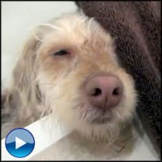 Kitten And Puppy Compassion Learn It Teach It Share It CATS - Cute portraits baby and rescue dog