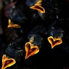 Hungry Hearts -- baby birds!