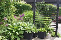 Love the trellis. Garden Privacy, Garden Fencing, Lawn And Garden, Garden Screening, Shade Plants, Garden Inspiration, Garden Ideas, Trellis, Garden Plants