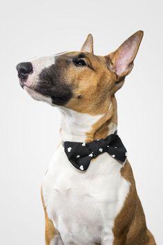 Brave men wear hearts. (Onni print, Doggy Style bow) || Rohkeat miehet käyttävät sydämiä. (Onni-kuosilla, Doggy Style-rusetti) Joko, Brave, Animals, Style, Swag, Animales, Animaux, Animal, Animais