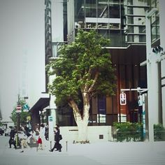 Kenichi Kamio - Tree and crossing from Today's piano piece  May.25,2014