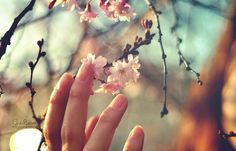 #flowers #pink #hand #fingers #delicate #nature