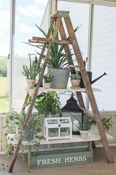 Click to see more photos of this lush and lovely potted garden on DIY ladder shelving!   LoveGrowsWild.com