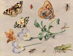 Jan van Kessel I (Antwerp 1626 - 1679). Description. A study of butterflies, a grasshopper and other insects. Medium & dimensions. oil on panel 14 x 18 cm.