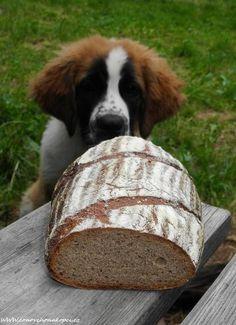 Český, 100 % žitný chleba Food And Drink, Bread, Bakeries, Breads