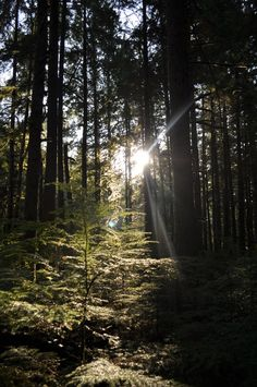 Morning light on the Grand Ridge Park trail. Photo by Tanaya Lanning Meagher  Right in my backyard!