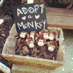 Fun party favor idea, how cute. - from tiny's birthday. adopt a tiny guy! Will probably do this with owls since finding an antique bird cage was harder than I thought