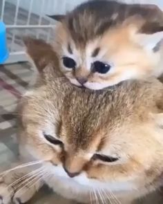 Animals Discover Lovely mom and baby - Katzen Cute Funny Animals Cute Baby Animals Animals And Pets Cute Dogs Funny Cats Cute Animal Videos Cute Animal Pictures Cute Cats And Kittens Kittens Cutest Cute Funny Animals, Cute Baby Animals, Animals And Pets, Cute Dogs, Funny Cats, Cute Animal Videos, Cute Animal Pictures, Cute Cats And Kittens, Kittens Cutest