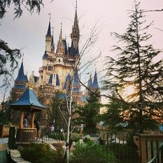 Disney World, looking especially magical. Photo courtesy of xsnapshots88 on Instagram.
