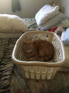 201 best cats and laundry images on pinterest in 2018 funny cats