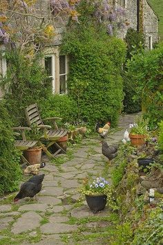 Beautiful English Stone Ivy Covered Cottage with chickens roaming freely in the yard.