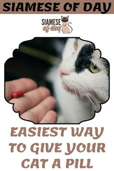 Cats are lovely pets to have at home. They are friendly pets but giving them something to eat unwillingly is a challenging task for owners. Even if you are an experienced cat owner then too it will be tough for you to give your cat a pill. #siamese #siameseofday #cats #pets #kittens #Blog #cattips #cathealth #kitten #justcats Kitten Care, Cat Health, Siamese, Pills, Kittens, Eat, Blog, Cute Kittens, Kitty Cats