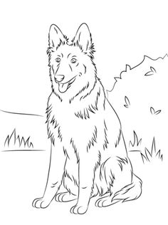 AKC Yorkshire Terrierstanding coloring pages