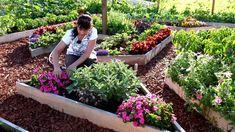 Bicarbonatul de sodiu în grădină. Iată 5 beneficii - IMPACT Home And Garden, Gardening, Youtube, Jars, Farm Gate, Plant, Advice, Garten, Lawn And Garden