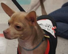 There are a few ways to ring in the New Year and support Chicago Animal Rescue this weekend.