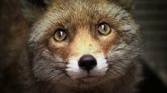 The Wildlife Aid Foundation